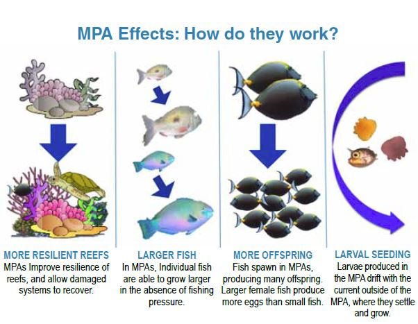 MPA Effects